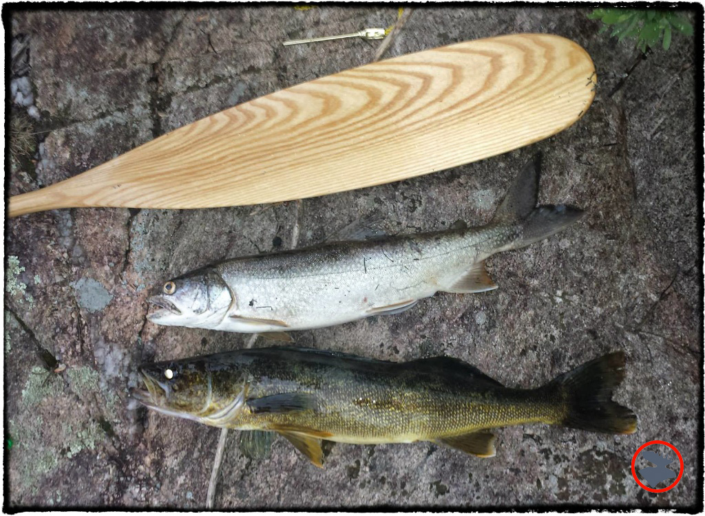 BMP-Post_Expedition-Log_Quetico_Trout-and-walleye_August-2015.jpg