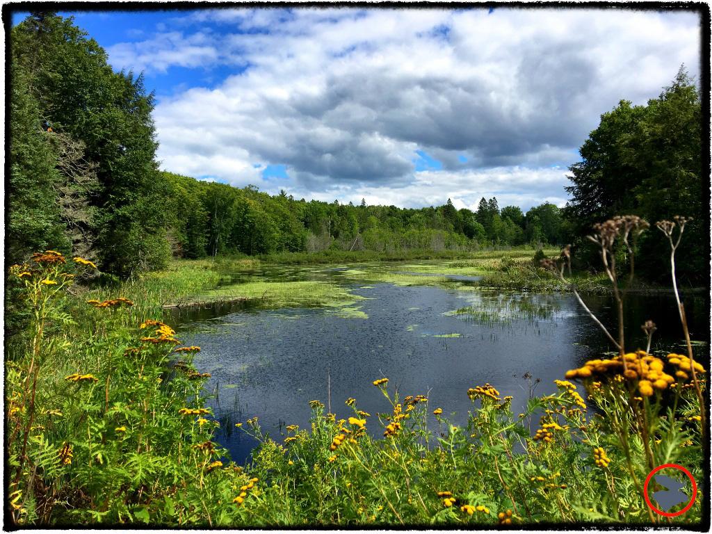 Sylvania Wilderness Area