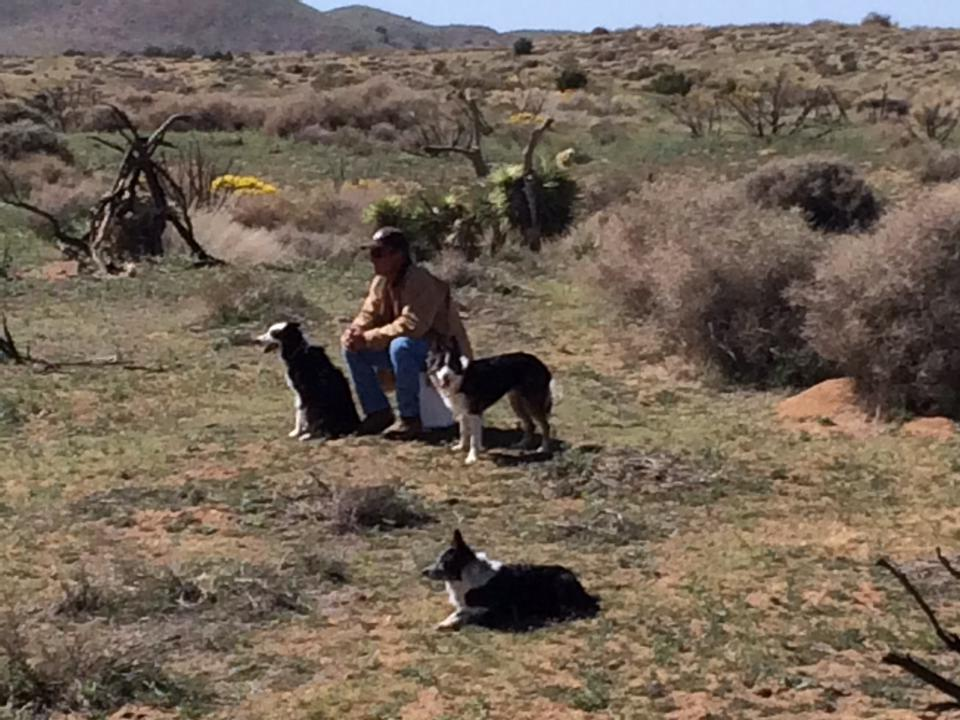 Ted with his crew, Drew, Tweed, and Panda, tending sheep in the open hills