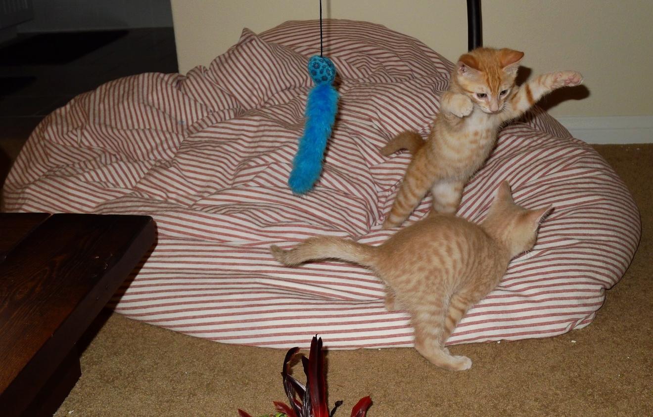 Kitties playing.jpg