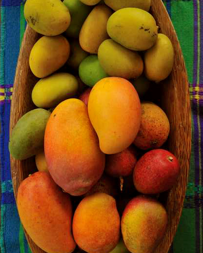 International Mango Festival 1.JPG