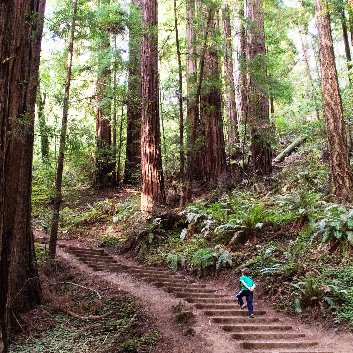 20160718-shunluoifong-stairs-redwoods.jpg
