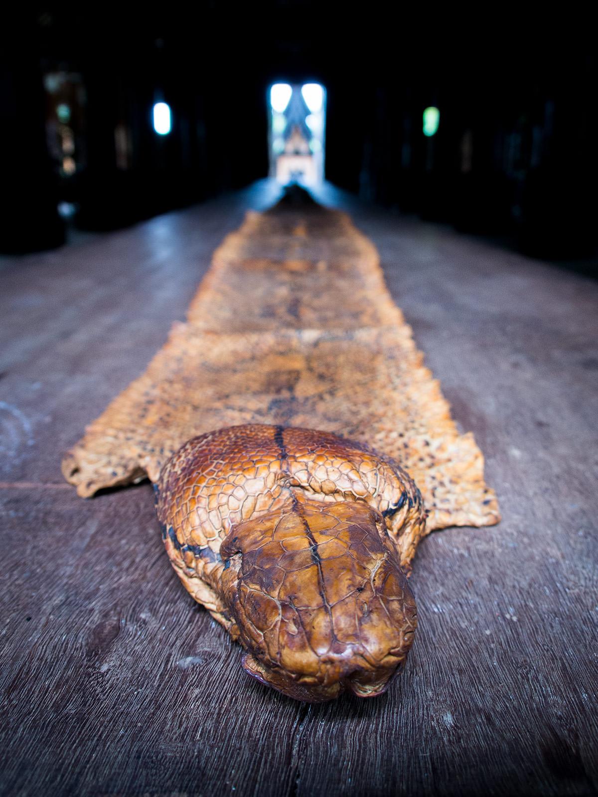 Snake skin at the Baandam Museum in Chiang Rai, Thailand