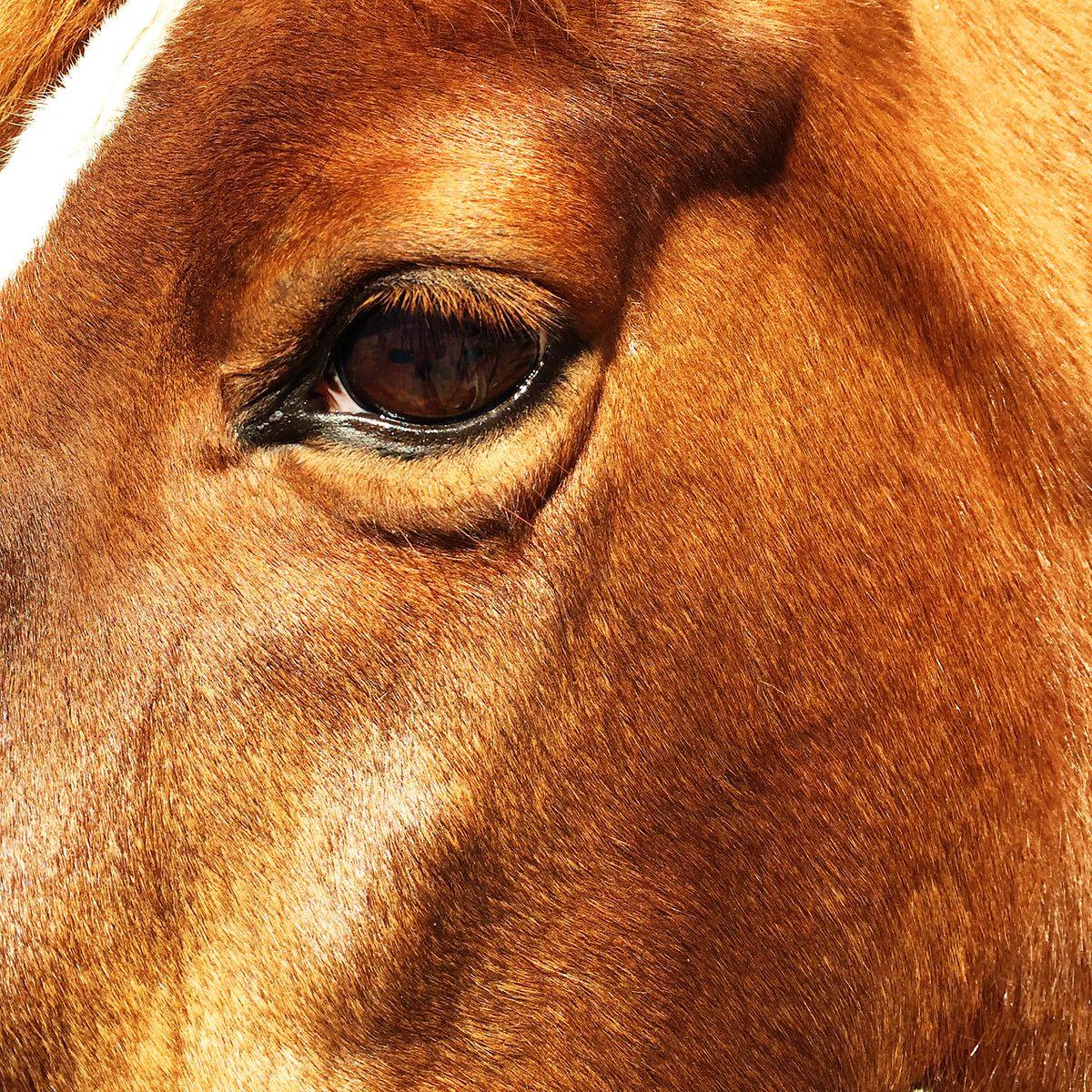 A horse near Santa Maria, California