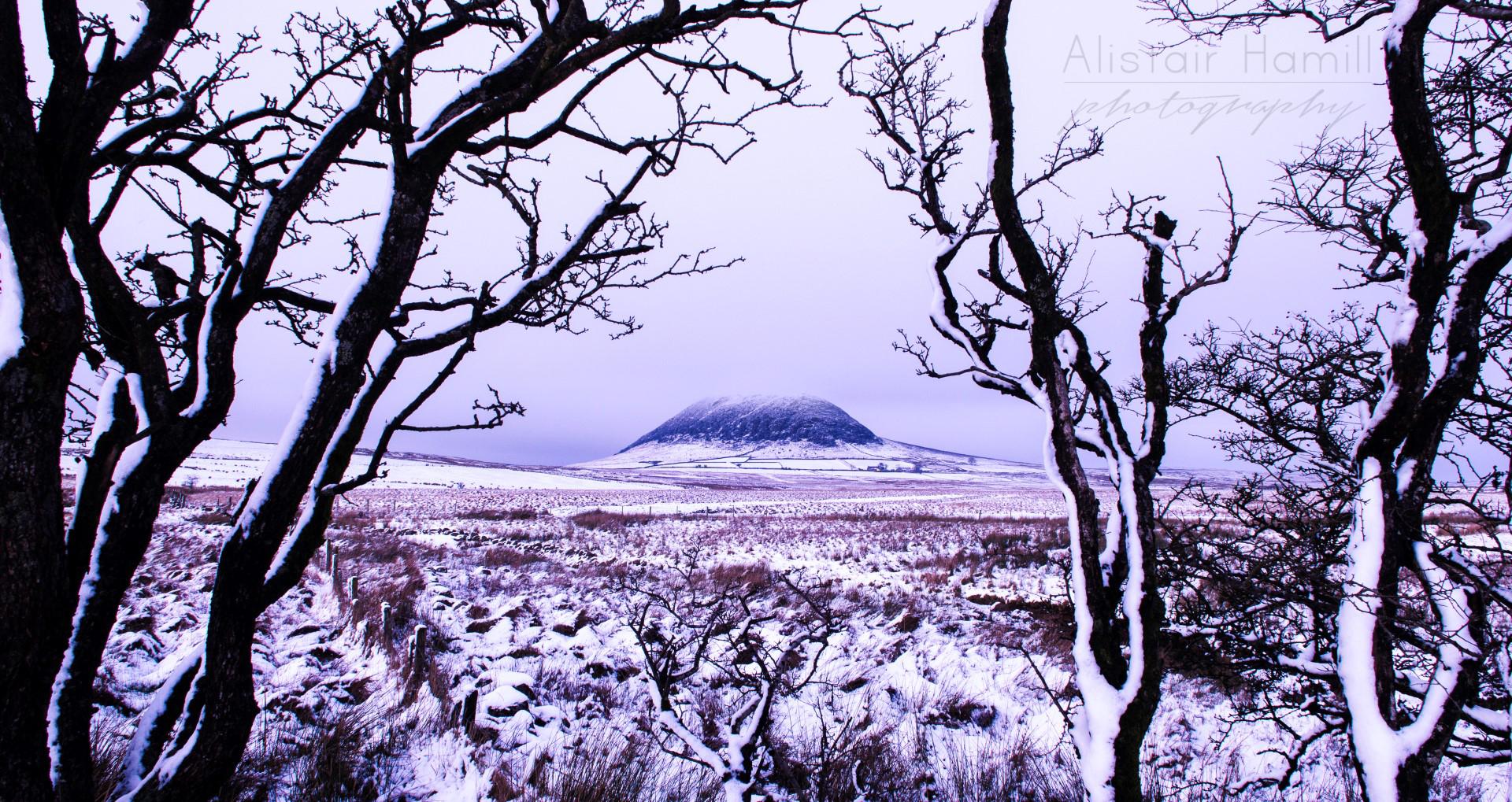 Slemish snow trees (Large) wm.jpg