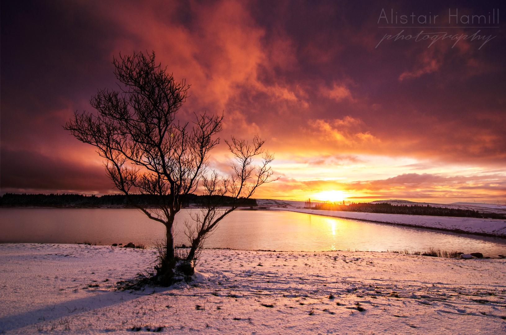 Ballyboley snow tree (Large) wm.jpg