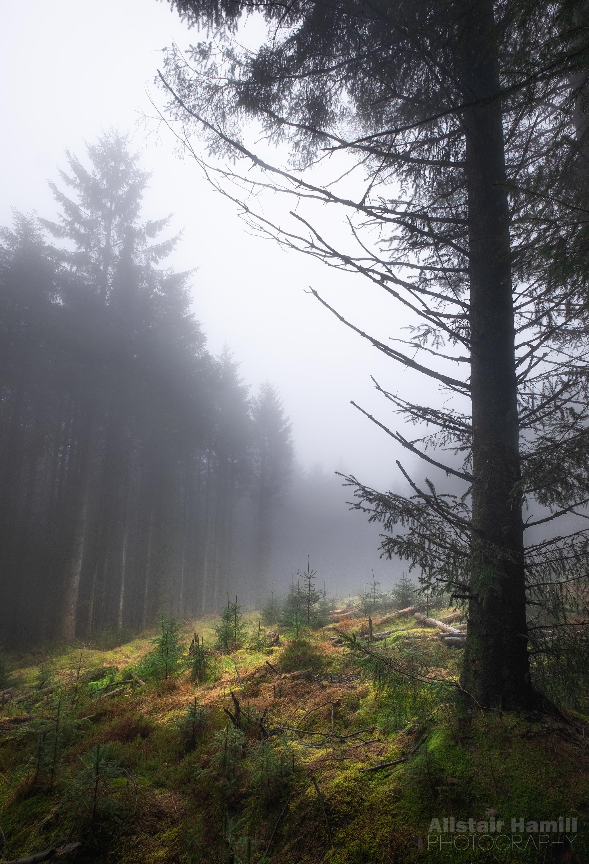 Woodland 4 (large) WM.jpg