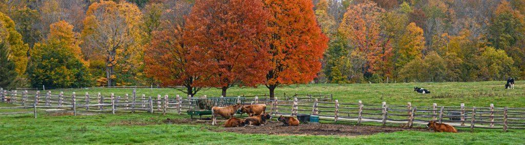 image source: billings farm