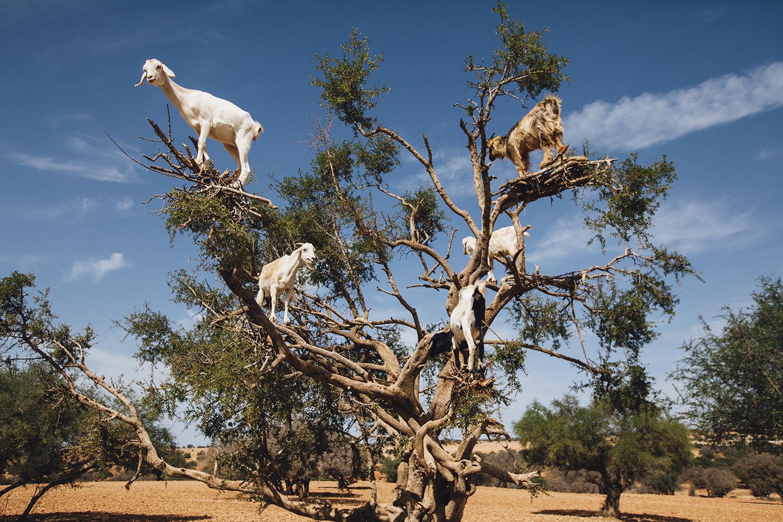 lifestyle-editorial-travel-washington-dc-malek-naz-photography-argon-tree-morocco.jpg