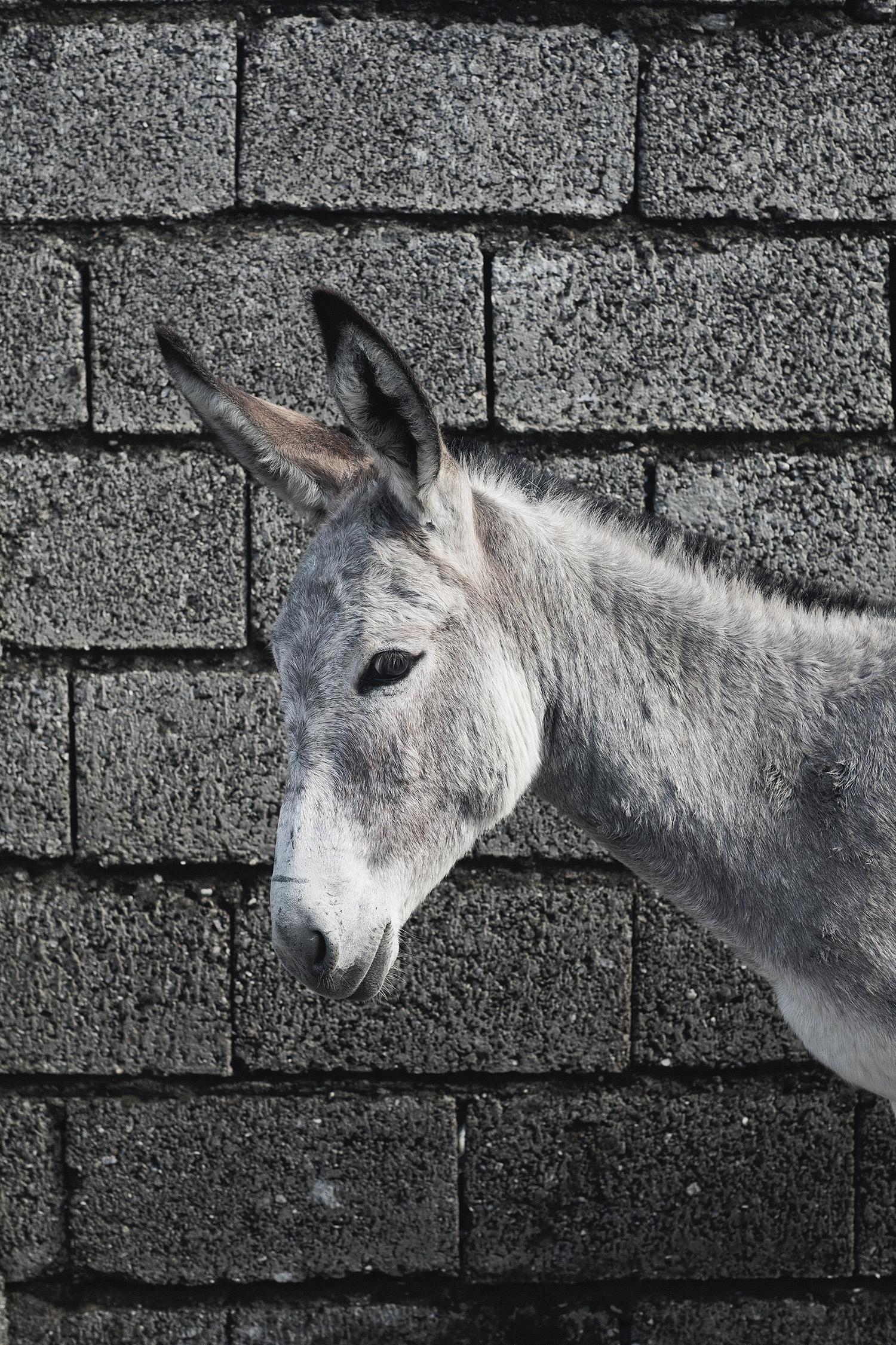 lifestyle-editorial-travel-washington-dc-malek-naz-photography-donkey-shomal-iran-bazaar.jpg