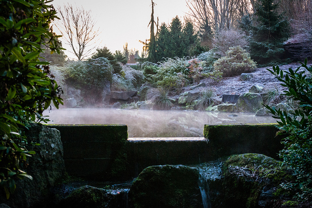 Spring Pond fog