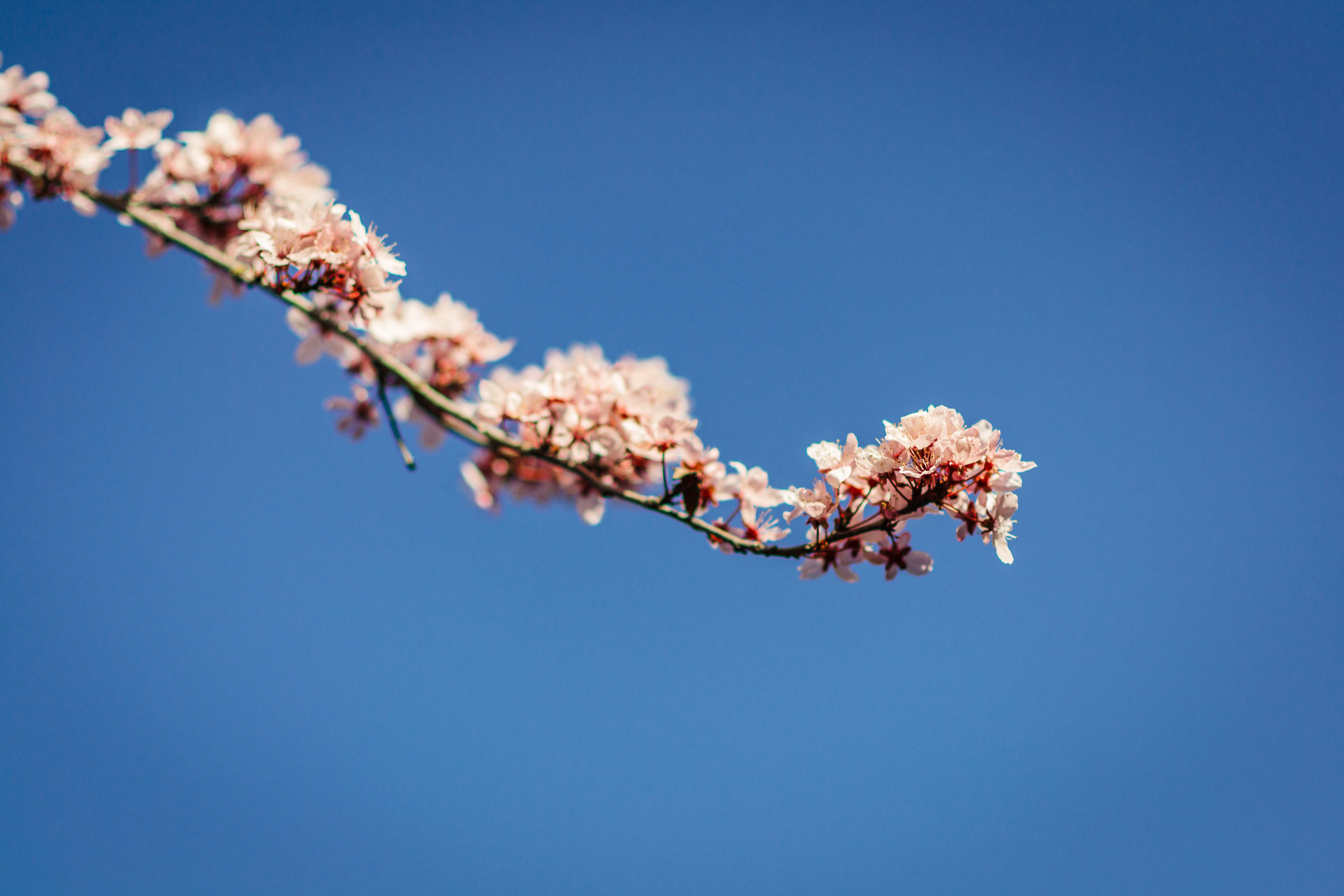 Nice depth of field and that perfect blue sky, though the depth of field was too shallow