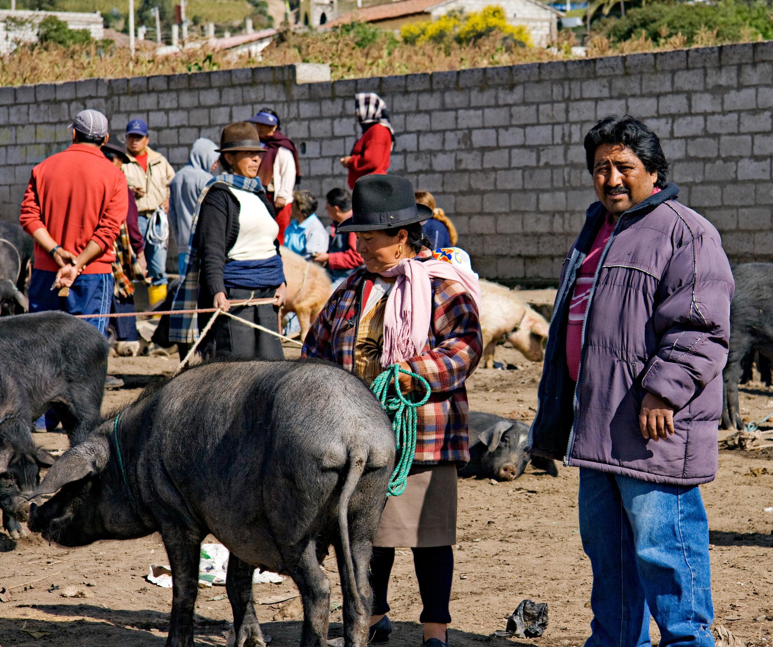 Saquisili, Animal and Food Market