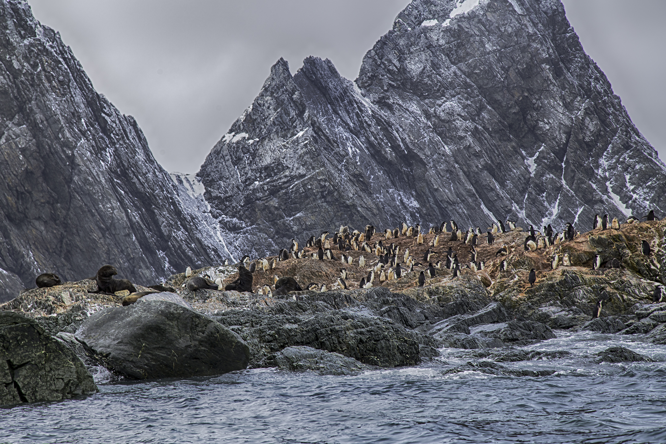 Penguins and Fur Seals on Elephant Island