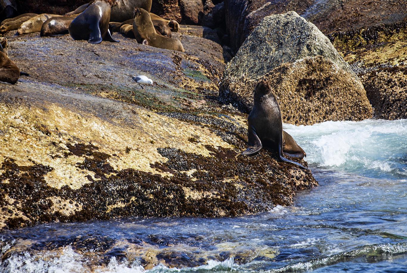 Seal Island, False Bay
