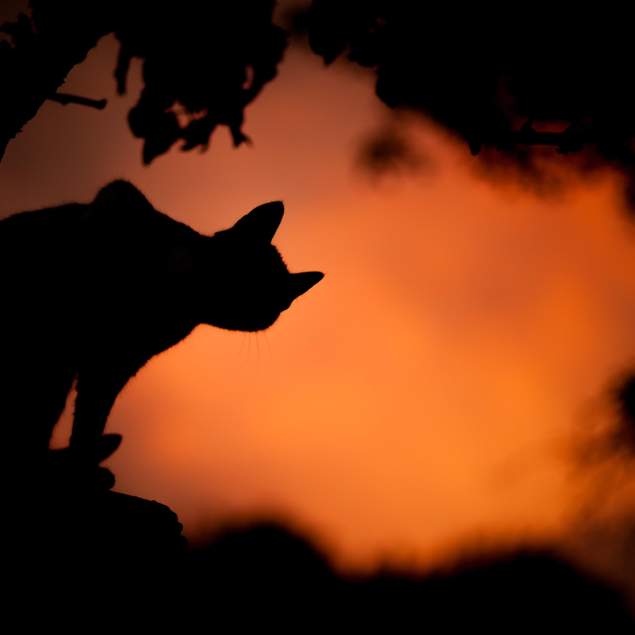 cat on orange background.jpeg