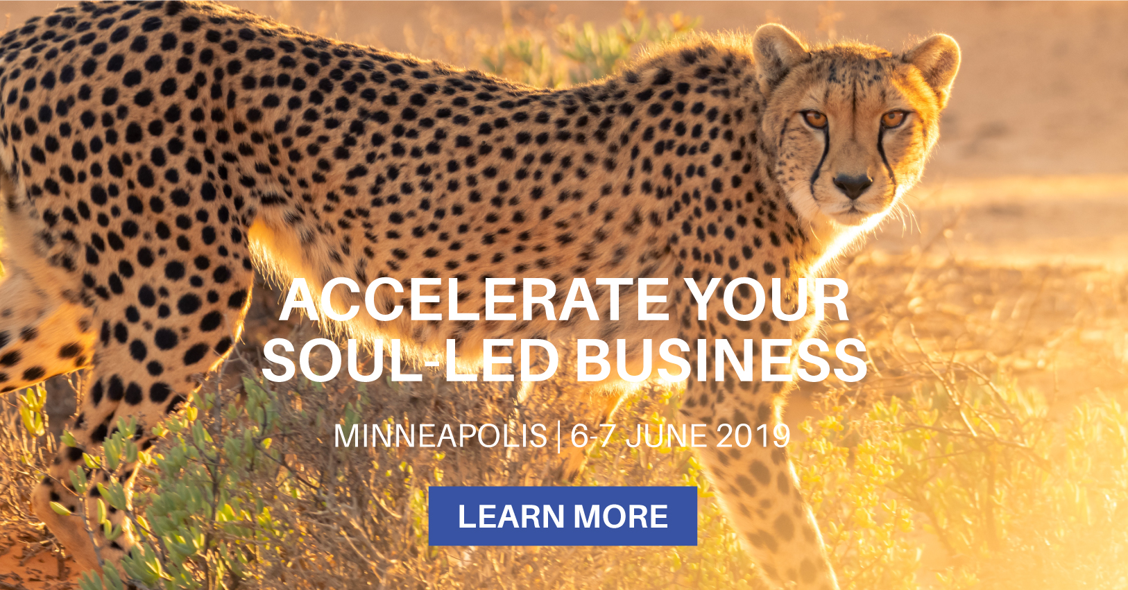Minneapolis-Email-Graphic-2.jpg