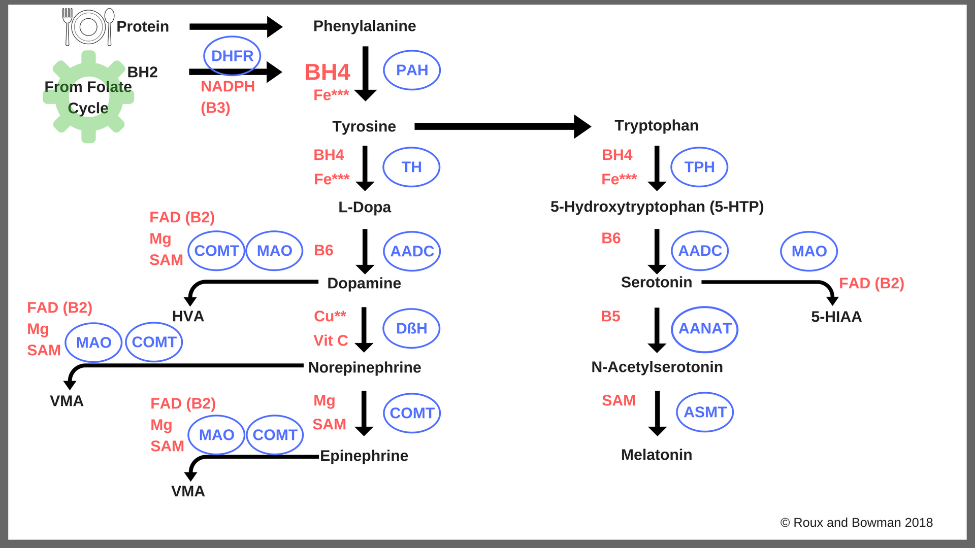 Neurotransmitter Synthesis with ENZYMES.png