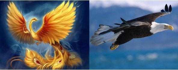 Phoenix (pretend bird), and Eagle (actual species)