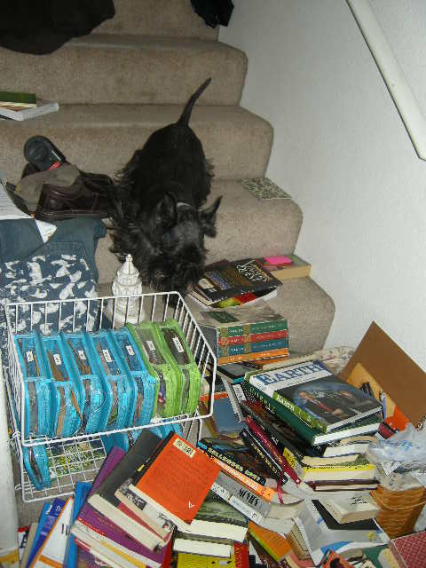 Paisley got trapped behind the Literary Barricade for a time.  Book Pile = Tall.  Scottish Terrier Inseam = Short.  FYI - the wire rack (upper right) holds my circular needle containment system.  It's the only organized thing in my life: each size has its own zippered case, sorted by diameter, in mm.  Hear me Roar.  Then ask me to remember what my zip code is.