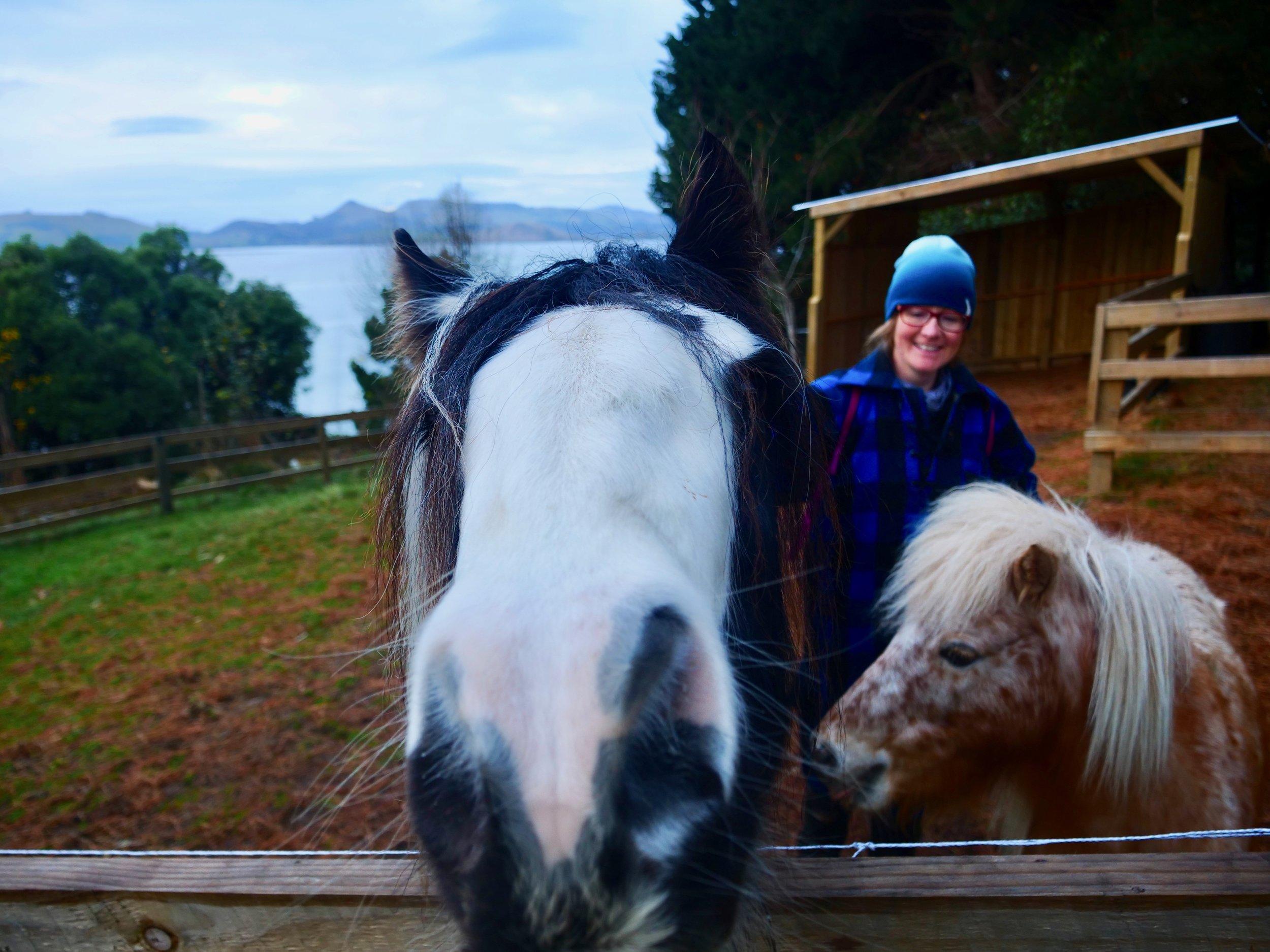 Emily feeding the horses.