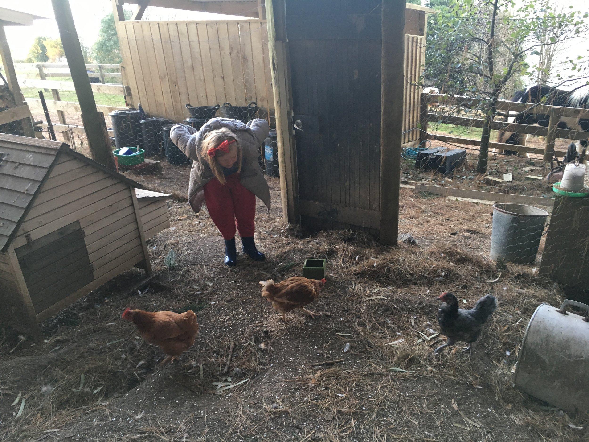 Lily chickens.JPG