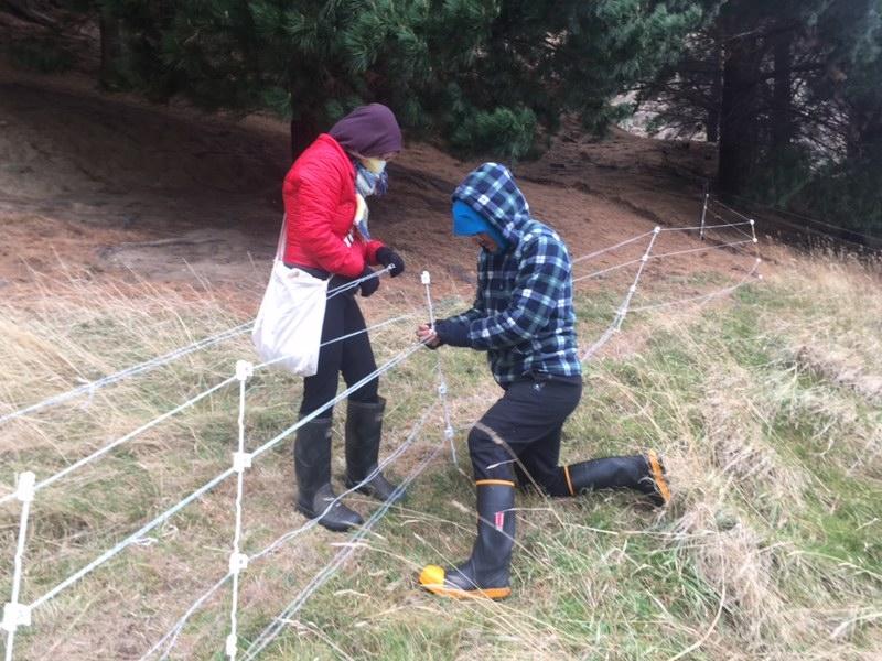 Mending the fence.JPG