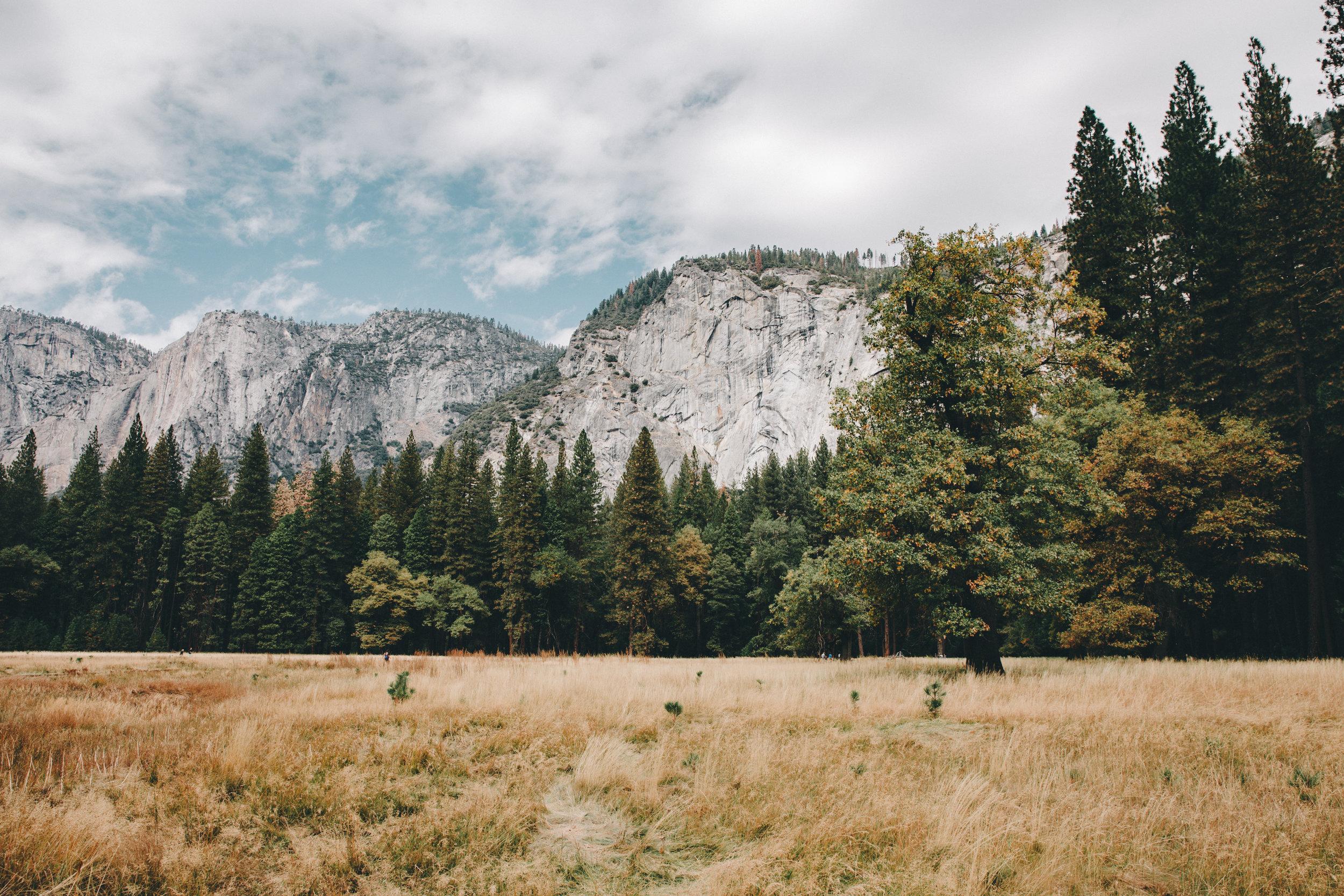 Yosemite Meadows