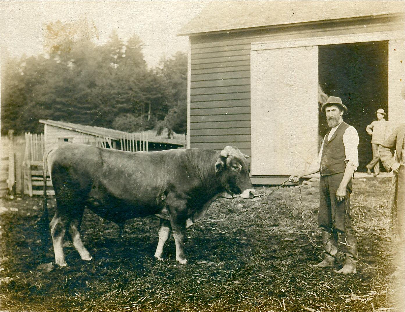 Prize-bull.jpg