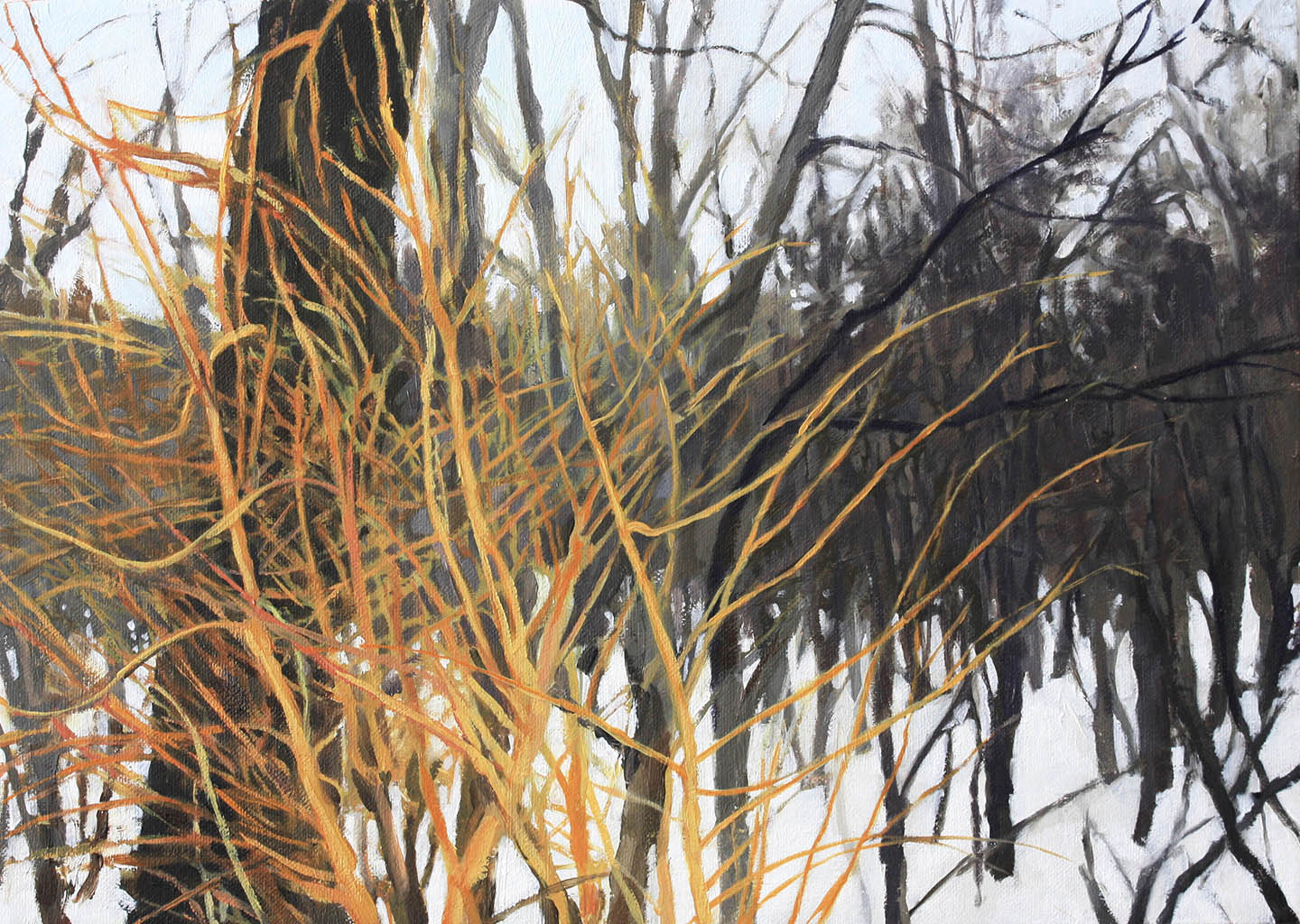 Yellow willows. ©Laura Shore 2015