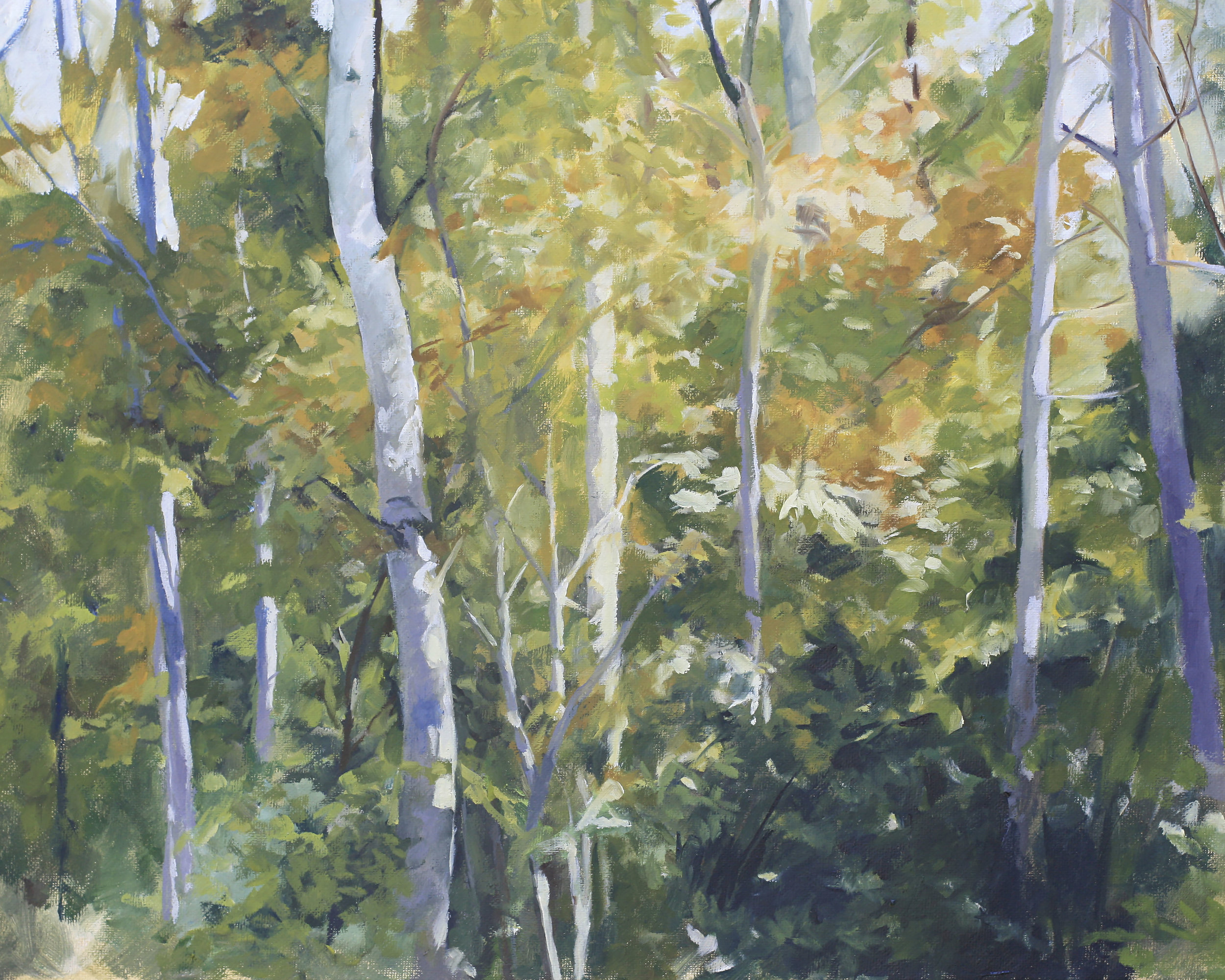Aspens in Late Summer