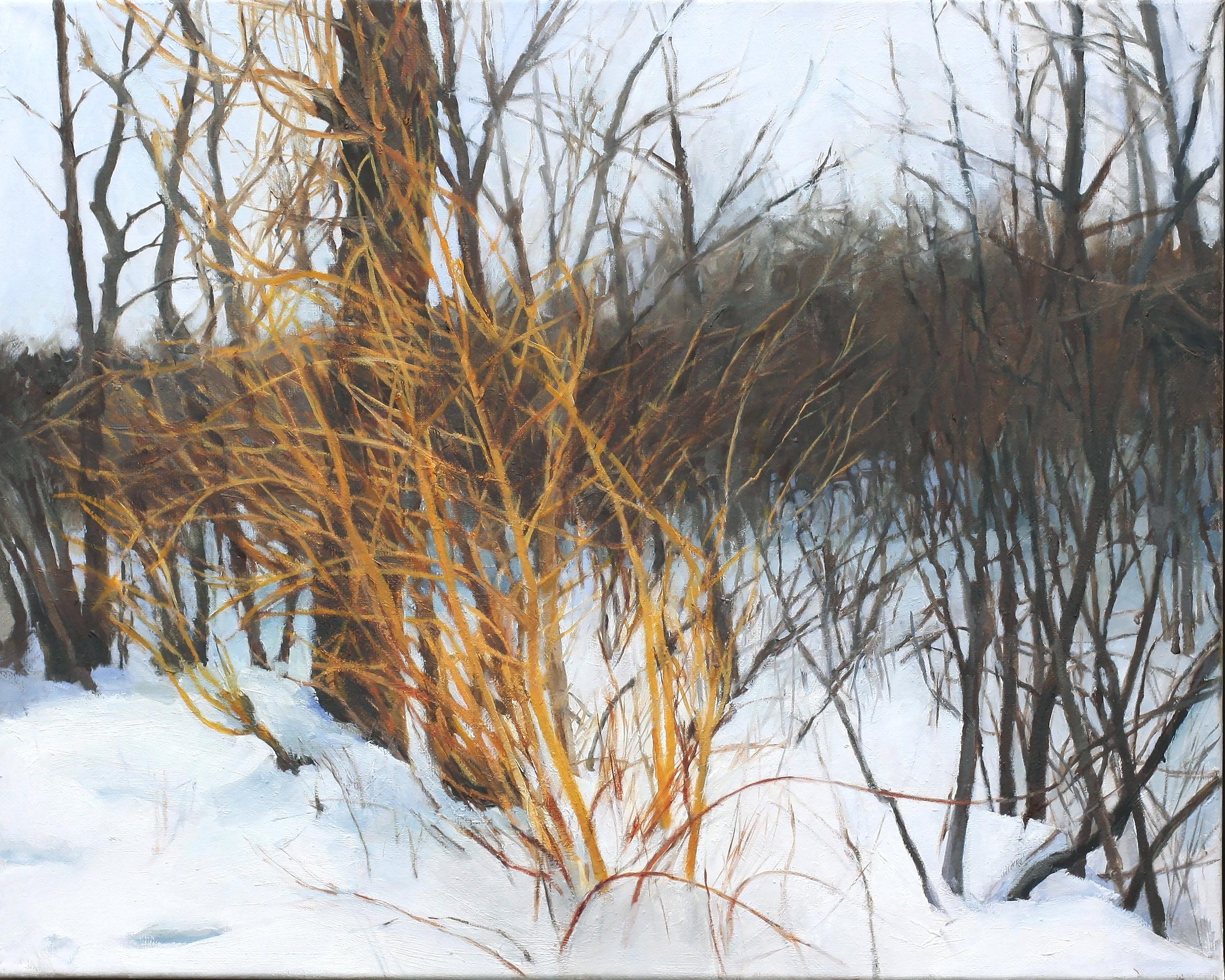 Winter Willows.jpg
