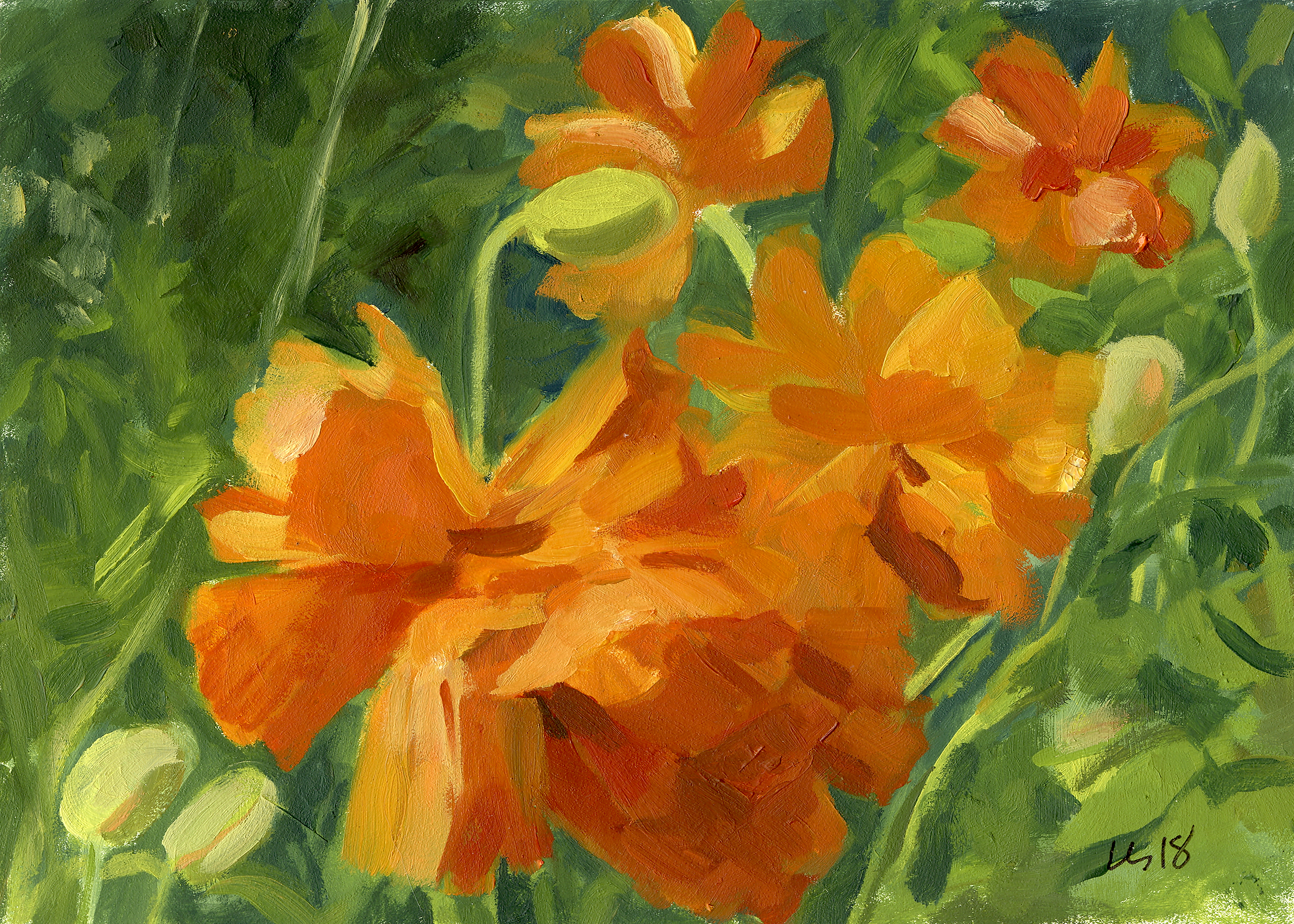 orange poppy-reference.jpg