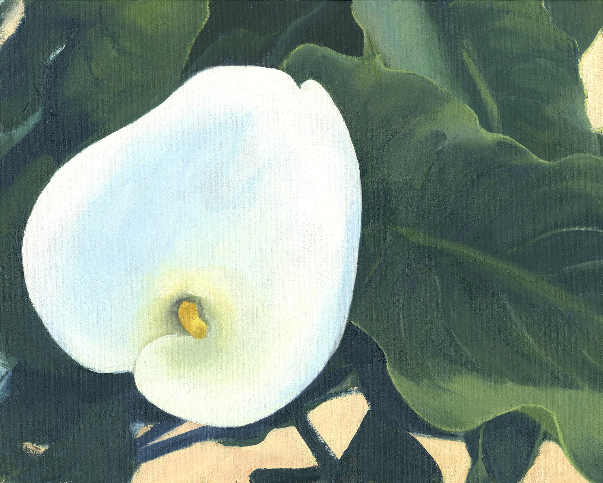 web-Cala Lily 1-reference.jpg