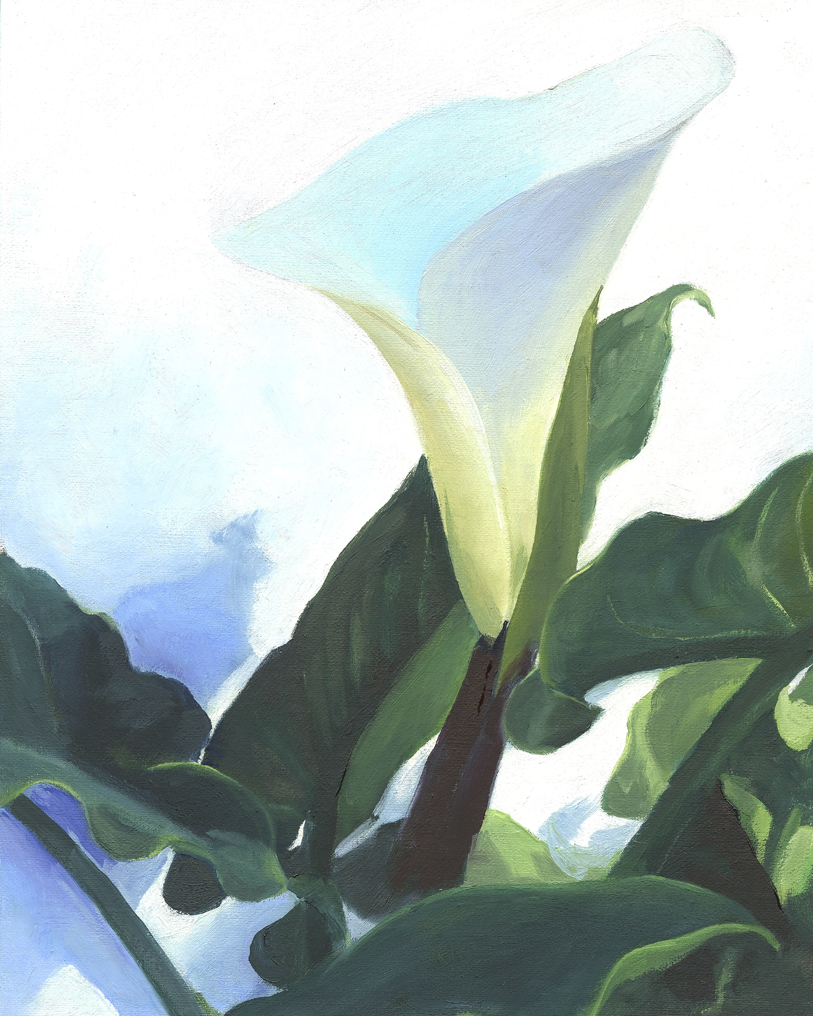 web-Cala Lily 3-reference.jpg