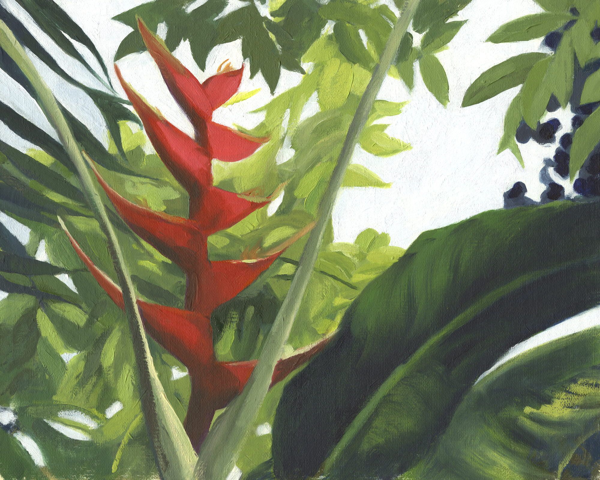 web-heliconia-reference.jpg