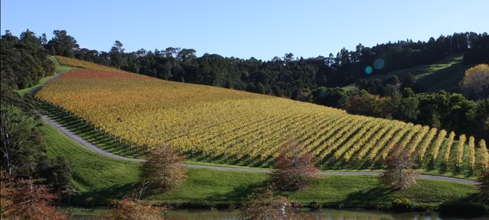 Brick-Bay-Vineyard.jpg