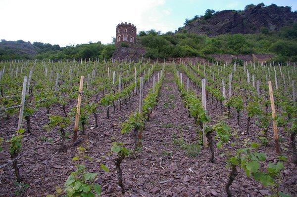Felsenberg vineyard. Photo courtesy of Jamie Good @ wineanorak.com