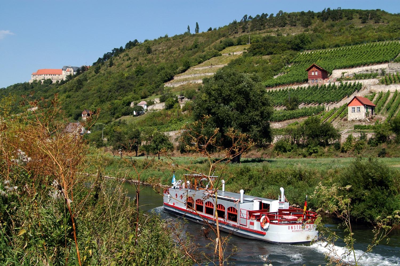 Vineyards on the slopes beside River Unstrut.
