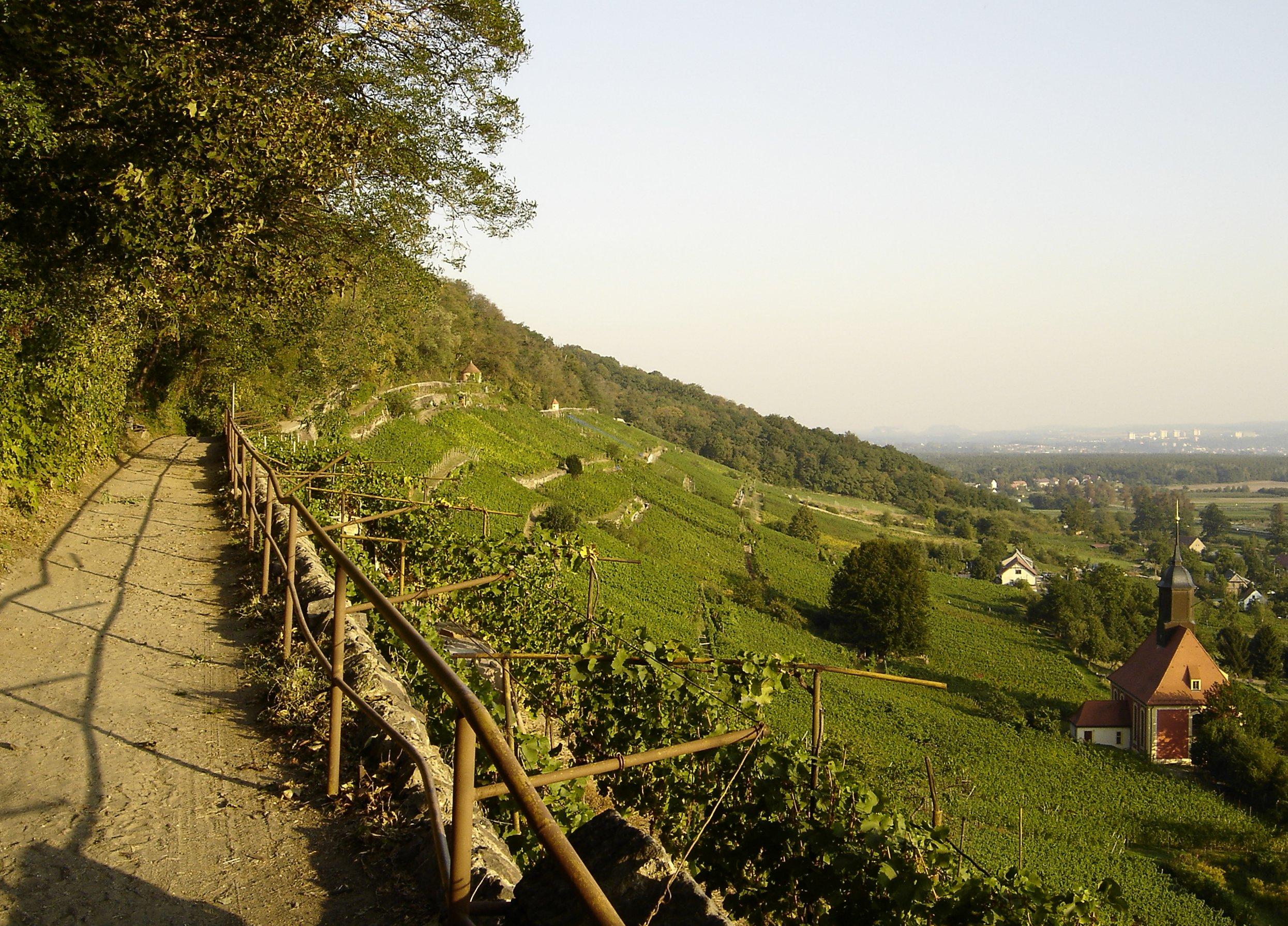 A footpath through a Sachsen vineyard in the village of Pillnitz.