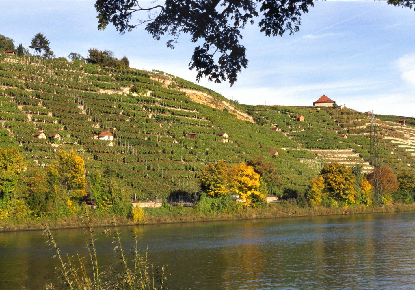 The well-knownCannstatter Zuckerle vineyard situated in terraces on the river Neckar, is in Bad Cannstatt, a part of Stuttgart.