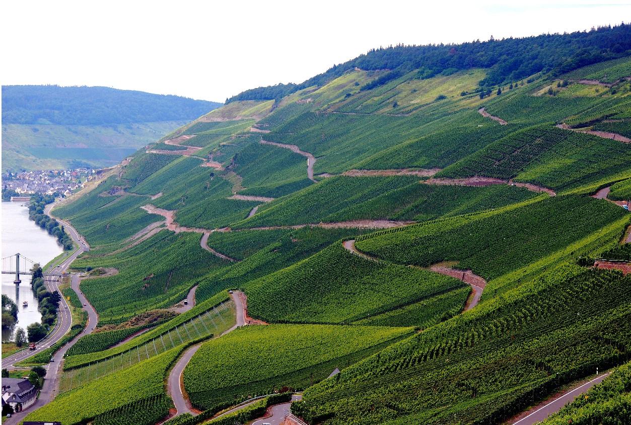 More beautiful Mosel Vineyards
