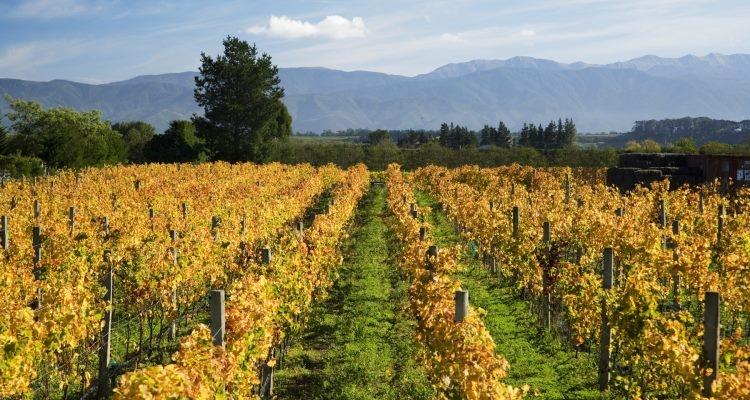 Schubert Wines  near Martinborough in the Wairarapa.