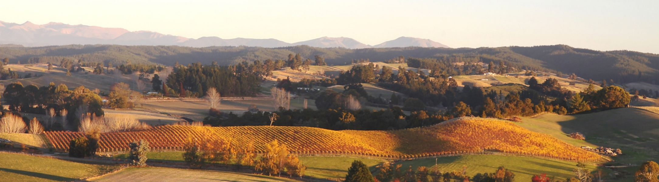 Neudorf's  Hill Block Vineyard, Nelson wine region.
