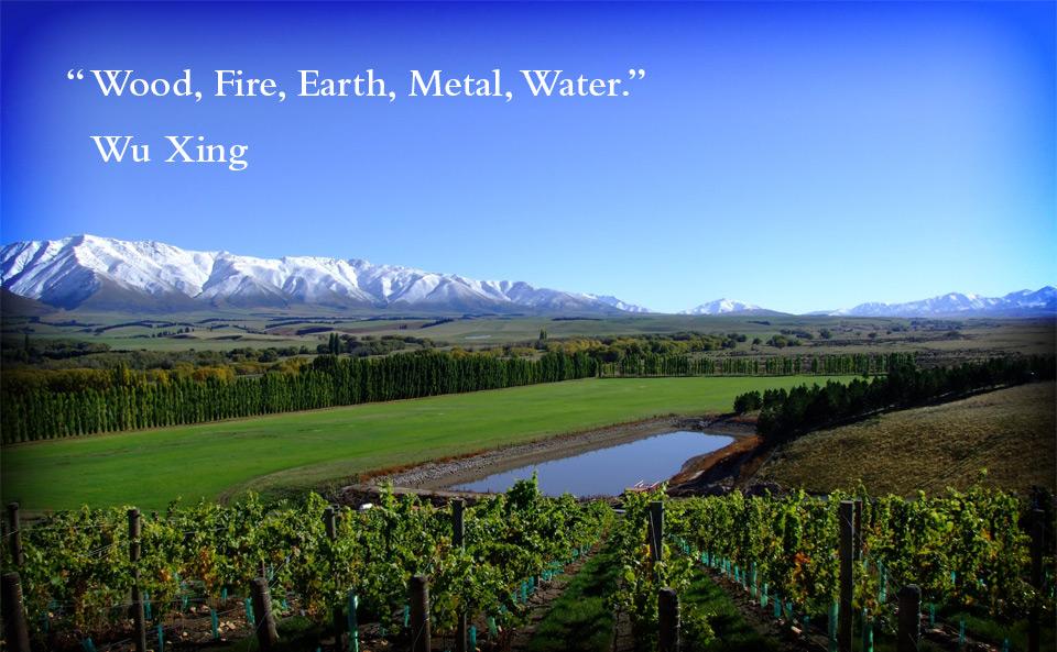 Pasquale Vineyard  in North Otago, Waitaki Valley.