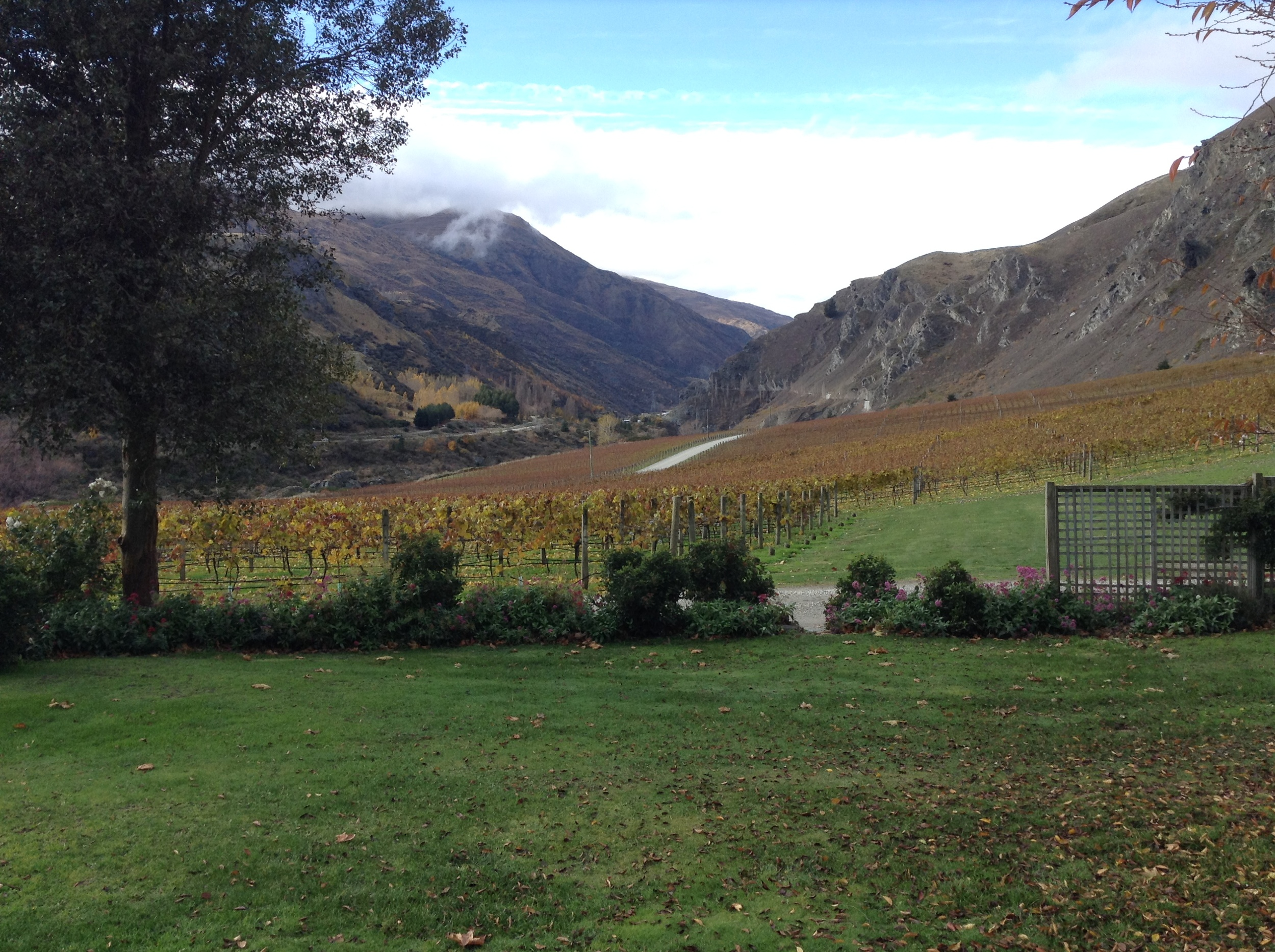 Looking back at the vineyard and the entrance to the 'Valley of Vines'