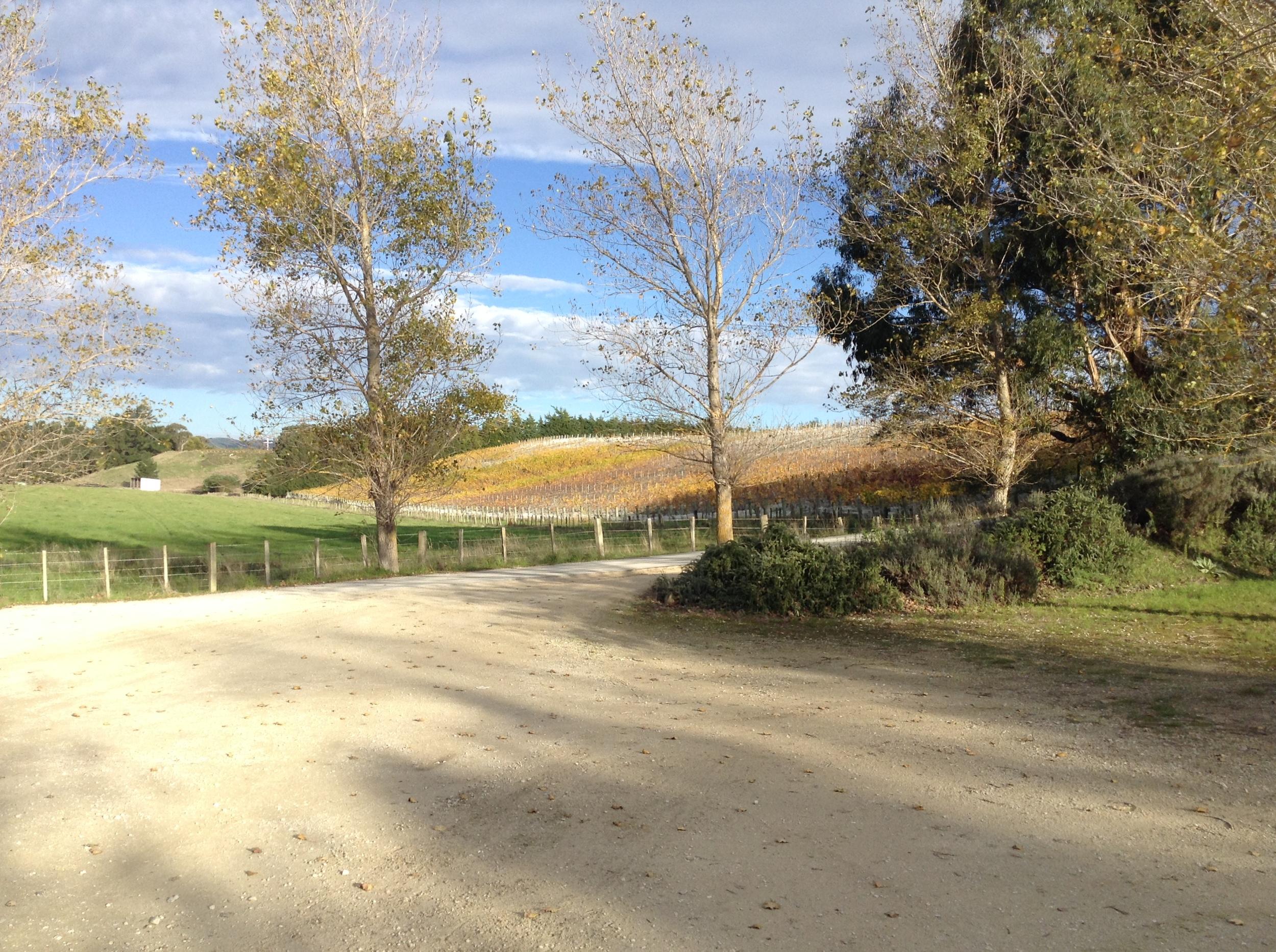Autumn colours in the hillside vineyard.