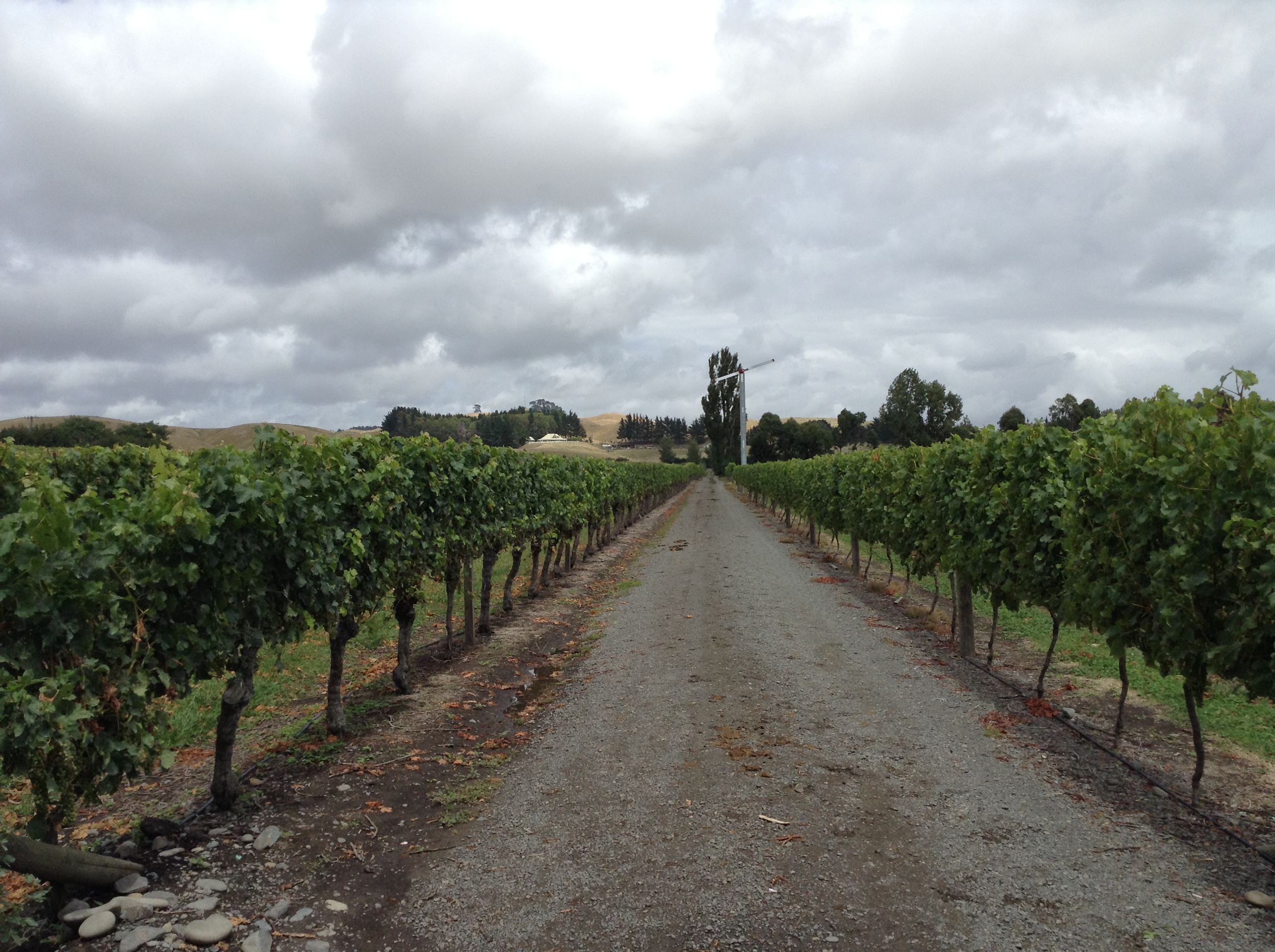 An overcast day with light showers, didn't stop my cellar door host from taking me on a tour of the home vineyard at Te Awanga