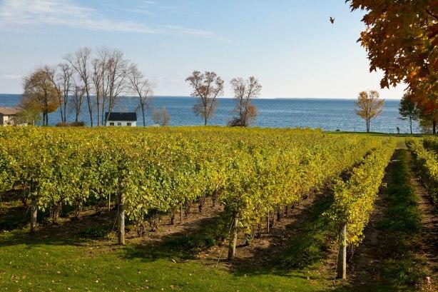 Vineyards at Wauposs , Prince Edward County