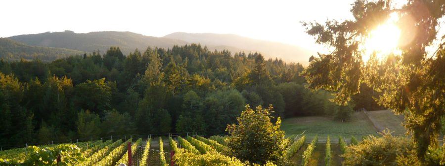 Blue Grouse Vineyard, Vancouver Island
